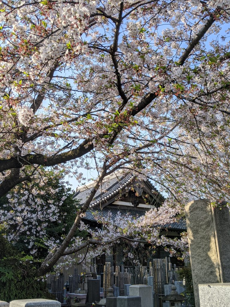 Bunkyo-ku in April
