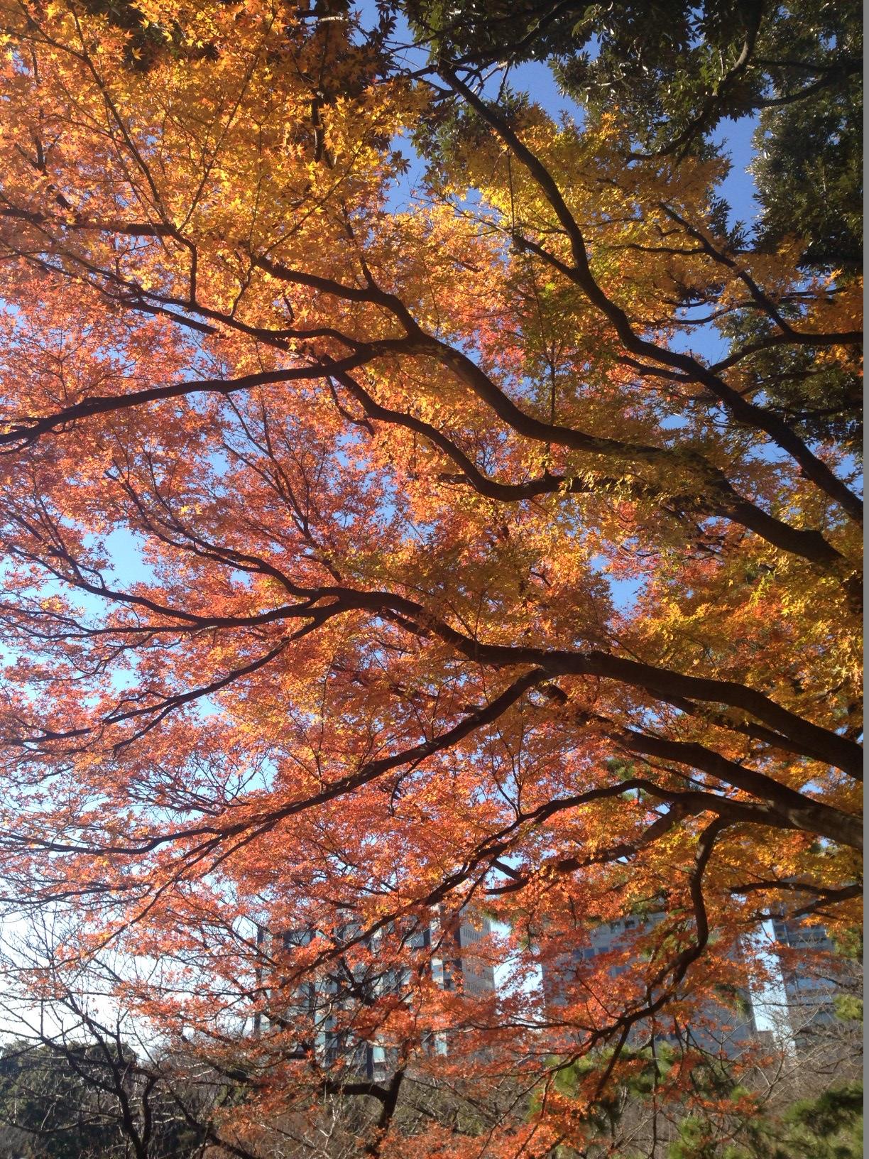 KitanomaruPark_Autumn2013